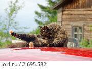 Купить «Утренний туалет на крыше красного автомобиля. Сцены из сельской жизни», фото № 2695582, снято 20 июля 2011 г. (c) Валерия Попова / Фотобанк Лори