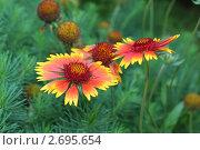 Два цветка. Стоковое фото, фотограф Дмитрий Антонов / Фотобанк Лори