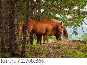 Купить «Лошади на вершине горы», фото № 2700366, снято 15 июля 2011 г. (c) Яков Филимонов / Фотобанк Лори