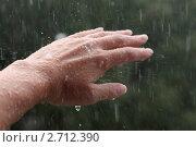 Летний дождь. Стоковое фото, фотограф Князева Наталья / Фотобанк Лори