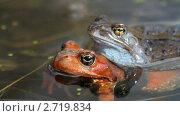 Лягушки в воде. Стоковое видео, видеограф Алексас Кведорас / Фотобанк Лори