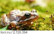Лягушка. Стоковое видео, видеограф Алексас Кведорас / Фотобанк Лори