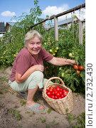 Женщина собирает помидоры. Стоковое фото, фотограф Александр Романов / Фотобанк Лори