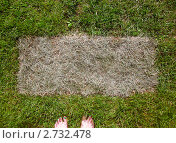 Босые ноги на газоне. Стоковое фото, фотограф Оксана Петрова / Фотобанк Лори