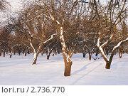 Зимний сад. Стоковое фото, фотограф Алексей Омельянович / Фотобанк Лори