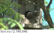 Купить «Скворец кормит птенца в скворечнике», видеоролик № 2740046, снято 6 июня 2011 г. (c) Андрей Некрасов / Фотобанк Лори