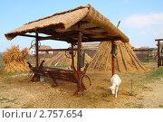 Купить «Коза во дворе», эксклюзивное фото № 2757654, снято 21 августа 2011 г. (c) Дорощенко Элла / Фотобанк Лори
