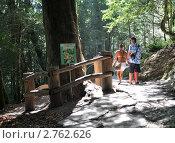 Купить «Тысячелетний тис в Тисо-самшитовой роще, Сочи», фото № 2762626, снято 20 августа 2011 г. (c) Анна Мартынова / Фотобанк Лори