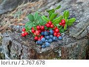 Купить «Лесные ягоды», фото № 2767678, снято 12 августа 2011 г. (c) FotograFF / Фотобанк Лори