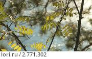 Алтай, река Катунь. Стоковое видео, видеограф Игорь Тирский / Фотобанк Лори