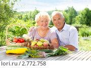 Купить «Пара пожилых людей в саду с урожаем», фото № 2772758, снято 14 августа 2011 г. (c) Алексей Кузнецов / Фотобанк Лори