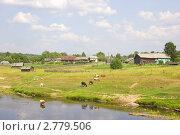 Коровы и овцы на берегу реки. Стоковое фото, фотограф Наталия Шевченко / Фотобанк Лори