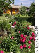 Купить «Бордовые пионы на садовом участке», фото № 2782546, снято 26 июня 2011 г. (c) Елена Гаврилова / Фотобанк Лори