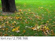 Купить «Осень, опавшие желтые листья на зеленой траве», фото № 2798166, снято 15 сентября 2011 г. (c) Dmitry S. Marshavin / Фотобанк Лори