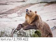 Медведь. Стоковое фото, фотограф Михаил Тайманов / Фотобанк Лори