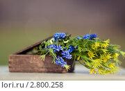 Цветы в коробке. Стоковое фото, фотограф Арсёнова Галина / Фотобанк Лори