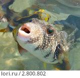 Купить «Рыбка Красного моря. Египет», фото № 2800802, снято 5 января 2011 г. (c) Екатерина Овсянникова / Фотобанк Лори