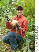 Купить «Молодая женщина с репой в огороде», фото № 2801926, снято 14 сентября 2011 г. (c) Яков Филимонов / Фотобанк Лори
