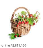 Купить «Земляника в корзинке», фото № 2811150, снято 2 июля 2011 г. (c) Воронин Владимир Сергеевич / Фотобанк Лори