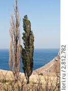 Два тополя. Стоковое фото, фотограф Евгения Шийка / Фотобанк Лори