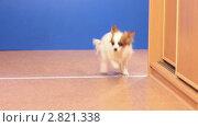 Купить «Бегающие собаки», видеоролик № 2821338, снято 25 сентября 2011 г. (c) Сергей Лаврентьев / Фотобанк Лори