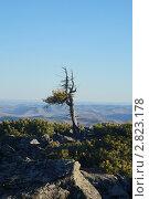 """Купить «Забайкалье, национальный парк """"Алханай"""". Вершина горы Алханай, южный отрог», эксклюзивное фото № 2823178, снято 21 сентября 2011 г. (c) Валерий Лаврушин / Фотобанк Лори"""