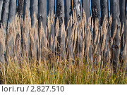 Трава возле забора. Стоковое фото, фотограф Марина Зимина / Фотобанк Лори
