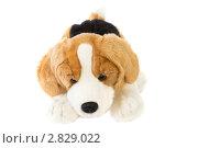 Игрушечная собачка (2011 год). Редакционное фото, фотограф Татьяна Малинич / Фотобанк Лори