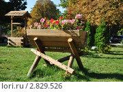 Красивая клумба в осеннем парке. Стоковое фото, фотограф Дарина Бабий / Фотобанк Лори