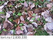 Сухие листья. Стоковое фото, фотограф Нелинов Сергей / Фотобанк Лори