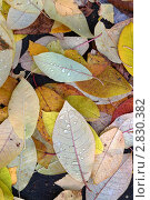 Листья на земле. Стоковое фото, фотограф Нелинов Сергей / Фотобанк Лори