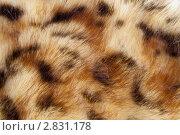 Купить «Искусственный мех», фото № 2831178, снято 17 сентября 2011 г. (c) Юлия Петрова / Фотобанк Лори