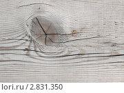 Купить «Сучок», фото № 2831350, снято 19 сентября 2011 г. (c) Игорь Долгов / Фотобанк Лори