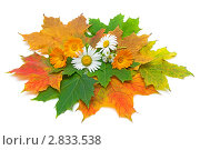 Купить «Осенний натюрморт», фото № 2833538, снято 1 октября 2011 г. (c) Ласточкин Евгений / Фотобанк Лори