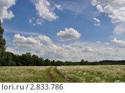 Полевая дорога. Стоковое фото, фотограф Алексей Сахаров / Фотобанк Лори
