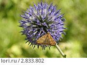 Бабочка на шаре. Стоковое фото, фотограф Алексей Сахаров / Фотобанк Лори