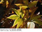 Осенняя листва. Стоковое фото, фотограф Алексей Сахаров / Фотобанк Лори