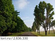 Купить «Дорога в сельской местности, уходящая вдаль», фото № 2836330, снято 14 июня 2011 г. (c) Dmitry S. Marshavin / Фотобанк Лори