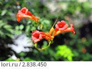Купить «Дикие цветы. Крым», фото № 2838450, снято 12 сентября 2011 г. (c) Vitas / Фотобанк Лори