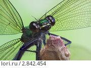 Купить «Перепончатые крылья», фото № 2842454, снято 24 июля 2011 г. (c) Забалуев Игорь Анатолич / Фотобанк Лори