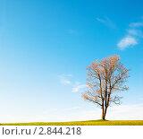Купить «Осенний пейзаж с одиноким кленом», фото № 2844218, снято 30 сентября 2011 г. (c) Игорь Соколов / Фотобанк Лори
