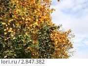 Осеннее ветки боярышника. Стоковое фото, фотограф Natalie Molchanova / Фотобанк Лори