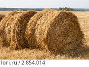 Два стога сена. Стоковое фото, фотограф Юлия Петрова / Фотобанк Лори