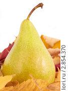Купить «Груша», фото № 2854370, снято 7 октября 2011 г. (c) Сергей Прищепа / Фотобанк Лори