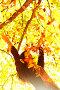 Девушка в осеннем парке, фото № 2879670, снято 6 октября 2010 г. (c) Иван Михайлов / Фотобанк Лори