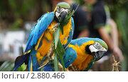 Попугайчики в Сингапуре / Parrot in Singapore. Стоковое фото, фотограф Вадим Иванов / Фотобанк Лори