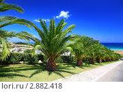 Купить «Аллея зелёных пальм, ведущая к морю», фото № 2882418, снято 31 июля 2010 г. (c) Losevsky Pavel / Фотобанк Лори