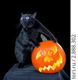 Купить «Черный кот в черной комнате похищает тыкву», фото № 2888302, снято 18 октября 2011 г. (c) Ирина Кожемякина / Фотобанк Лори