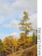Горный осенний пейзаж. Стоковое фото, фотограф Виталий Горелов / Фотобанк Лори