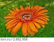 Кольцо в серединке цветка. Стоковое фото, фотограф Елена Булатова / Фотобанк Лори